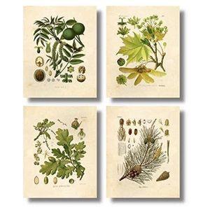 Set of 4 Boho Vintage Botanical Nature Prints